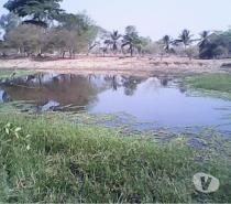 Fotos de SE VENDE FINCA 58 HECTAREAS PALMA AFRICANA CHIRIGUANA CESAR