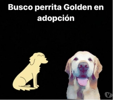 Fotos de BUSCO PERRITA GOLDEN EN ADOPCION