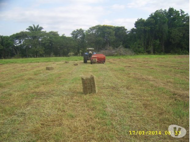 Fotos de semilla certificada pasto bermuda venezuela