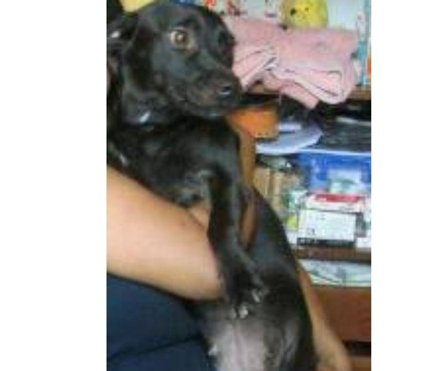 Fotos de Doy en adopción, Mestizas Kitti salchicha y Colin Barbuda