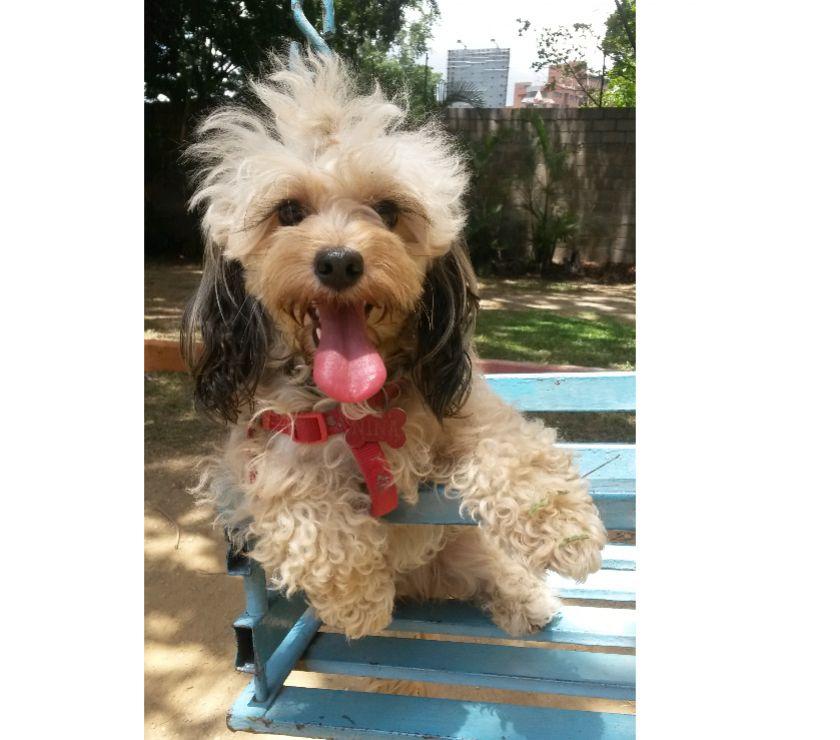 Fotos de Hospedaje de mascotas