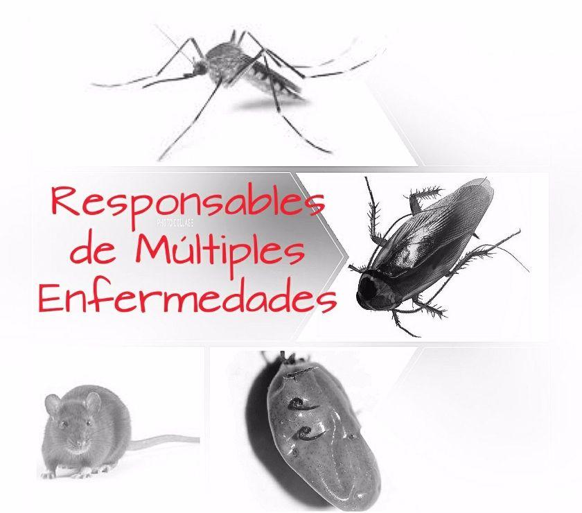 Fotos de Fumigaciones para Centros Comerciales Exterminamos Insectos