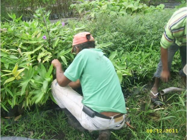 Fotos de vivero forestal en venezuela