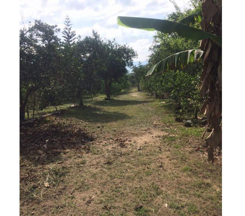 Fotos de SKY GROUP Vende Finca de Naranjas En Bejuma