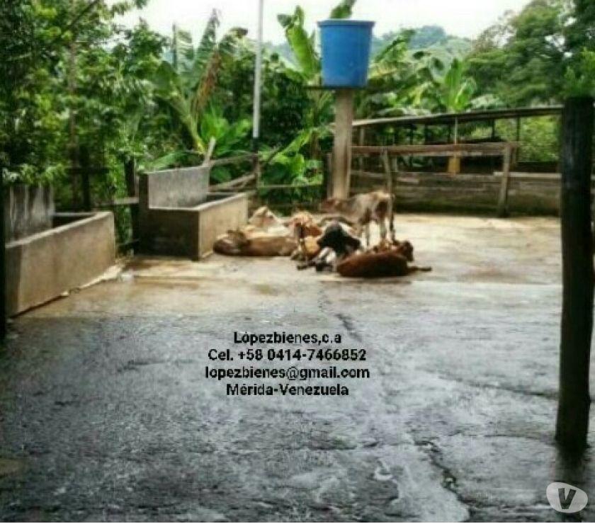 Fotos de Lopezbienes Vende Finca en Caño Tigre via Zea