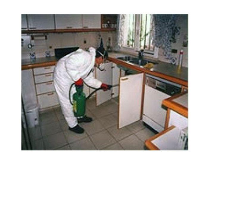 Fotos de Fumigaciòn contra: Cucarachas, Chiripas, Hormigas y Termitas