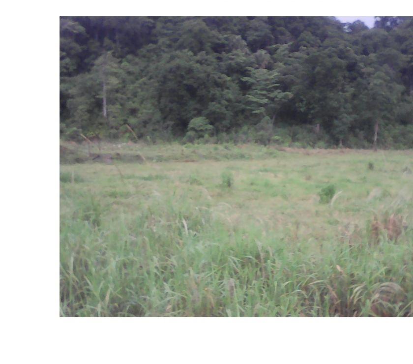 Fotos de hermosa granja de 6 hectareas