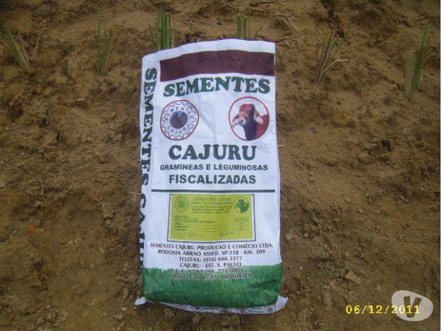 Fotos de semillas pastos certificadas en venezuela