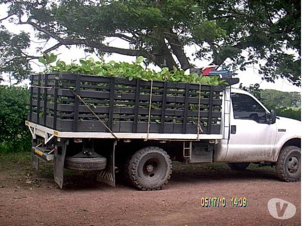 Fotos de semillas - semilleros - viveros venezuela