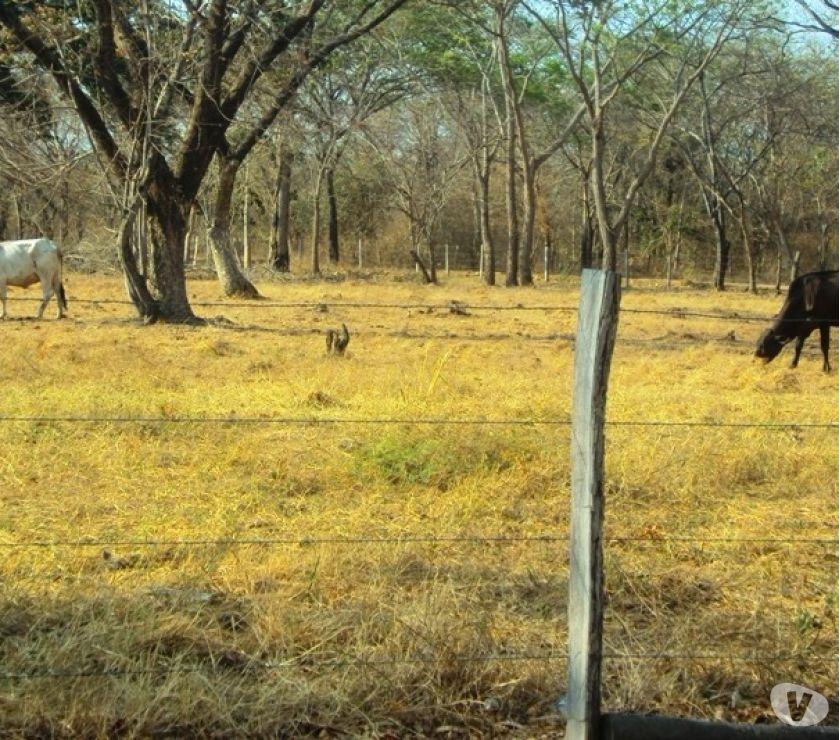 Fotos de Venta de Fincas y Hatos en el estado Cojedes