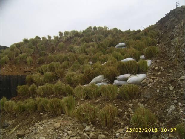 Fotos de bioingenieria vetiver Colombia y Venezuela.