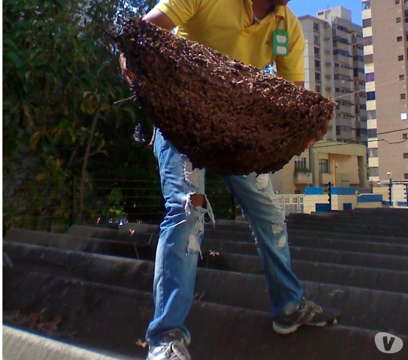 Fotos de Servicio de Fumigacion contra Plagas en Cabimas y Maracaibo